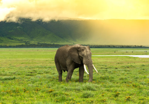 Introducing Tanzania<br>Spot the Big 5 in Ngorongoro