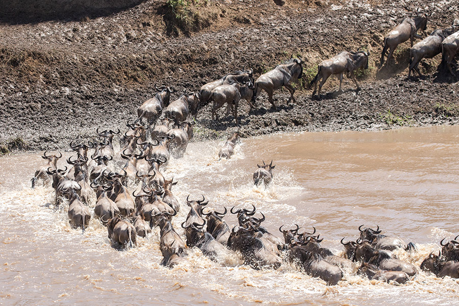 Serengeti migration - Mara river