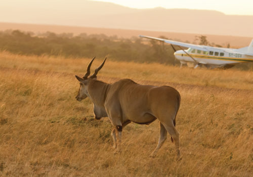 7 Day fly-in & drive safari<br>Northern Tanzania