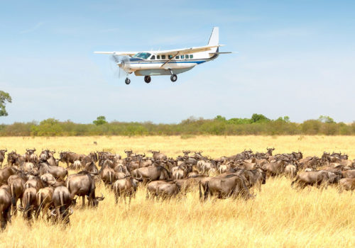 4 Day fly-in safari<br>Serengeti